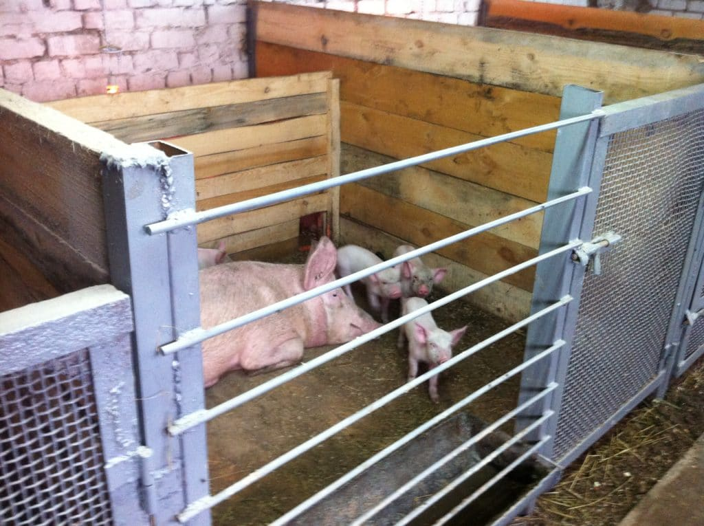 Свинарник своими руками фото проекты