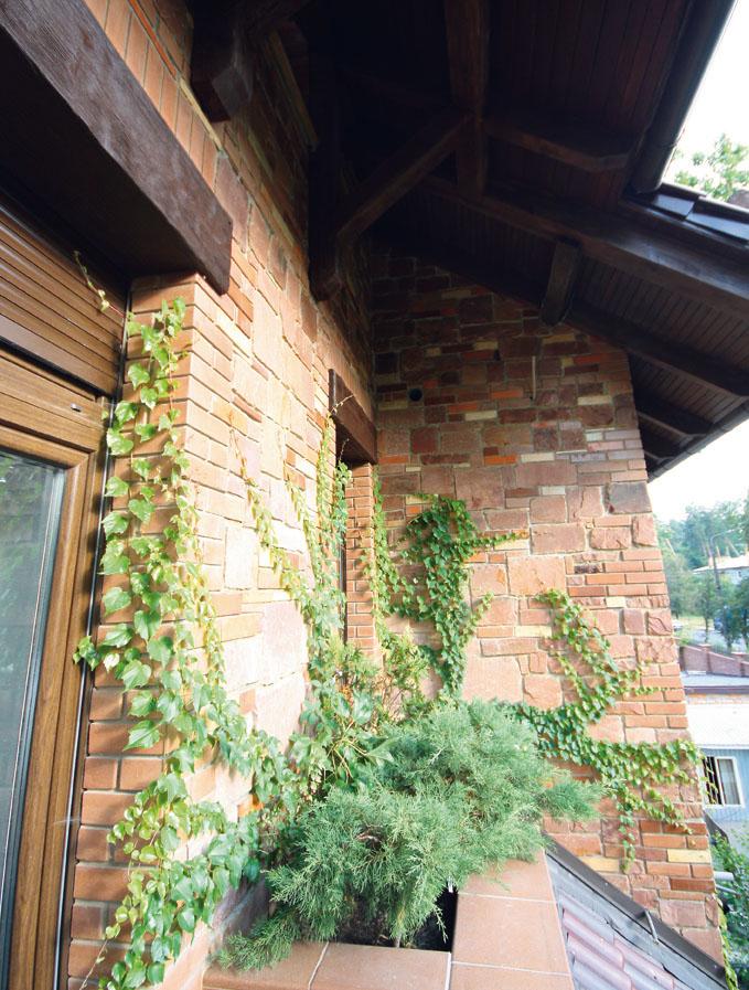 Вечнозеленые террасы на балконах