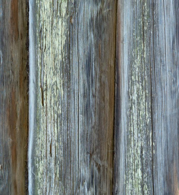 Синева - бич хвойных пород древесины