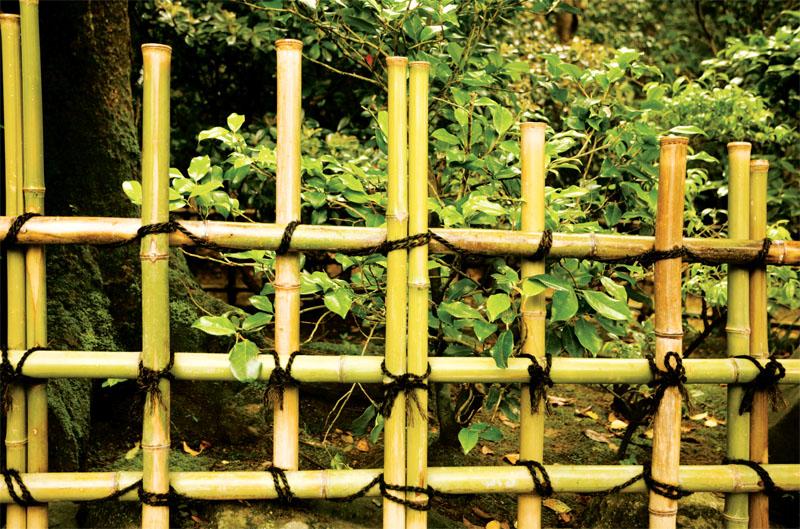 Забор из бамбука