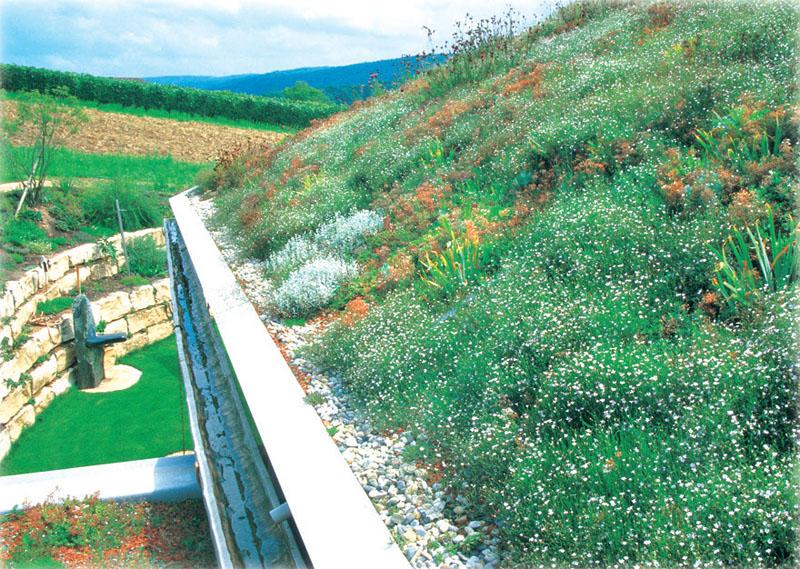 Озеленение крыши (Фото: ООО «ЗинКо Украина» (ZinCo))