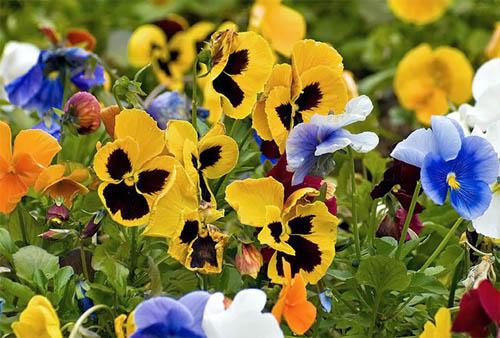 Цветник в саду: подбор растений и принципы композиции