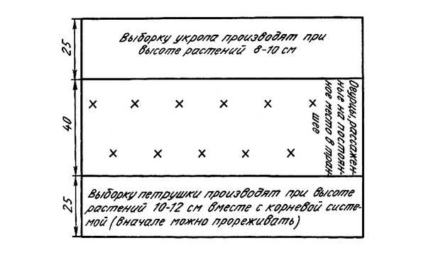 Формировка кустов огурцов