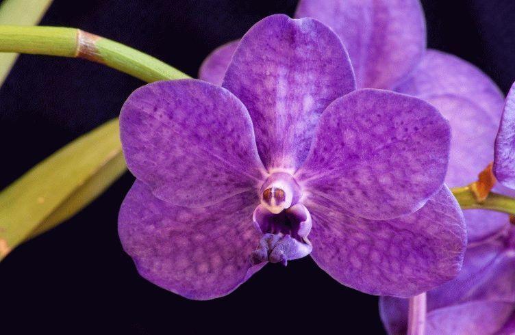Как лучше выращивать орхидею Ванду — уход и пересадка