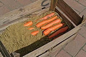 Как сохранить морковь