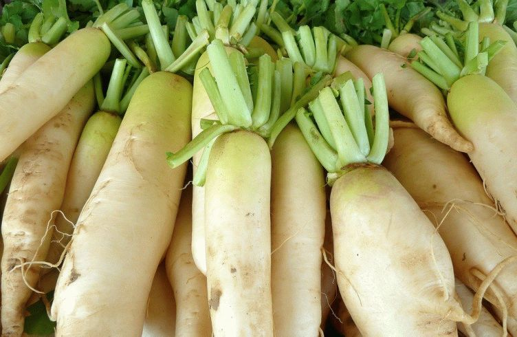 Как выращивать редьку дайкон в открытом грунте — посадка и уход