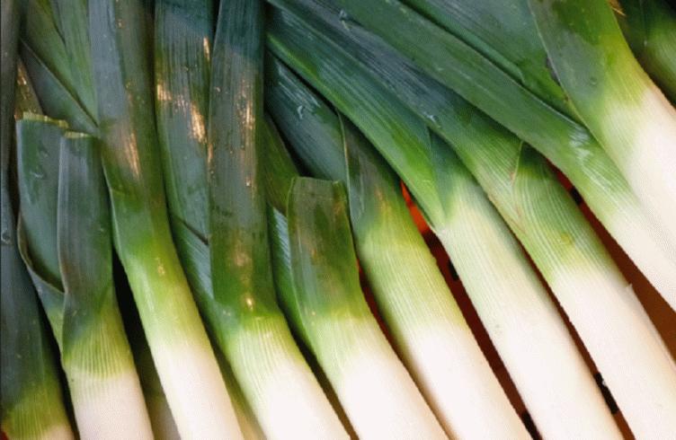 Как вырастить лук-порей из семян за один сезон — посадка и уход