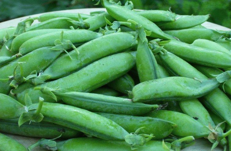 Как вырастить зеленый горошек в открытом грунте на даче — посадка и уход