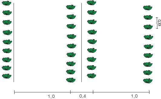 Правила выращивания капусты из семян