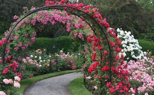 Создаем шикарную клумбу с розами своими руками
