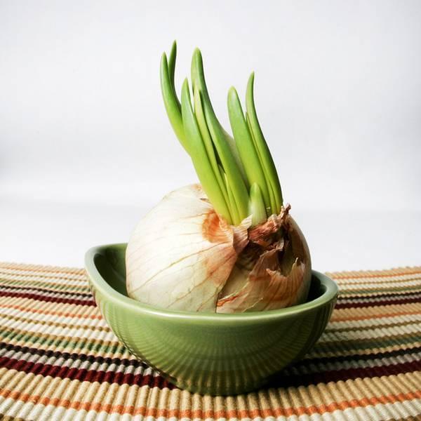 Свежий зеленый лук на вашем окне  как вырастить лук в домашних условиях