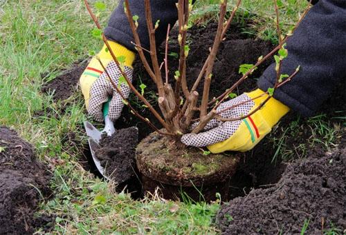 Уход за деревьями в саду весной