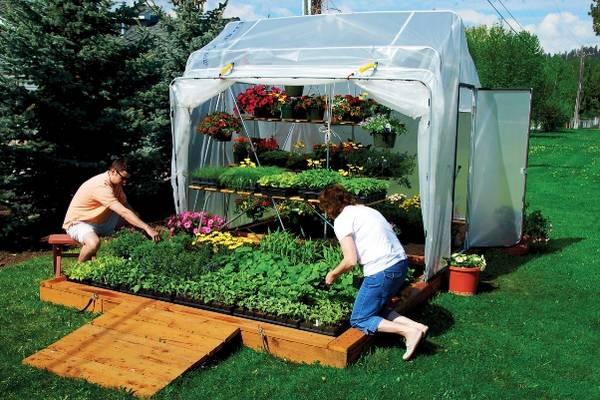 Выращивание зелени в парниках
