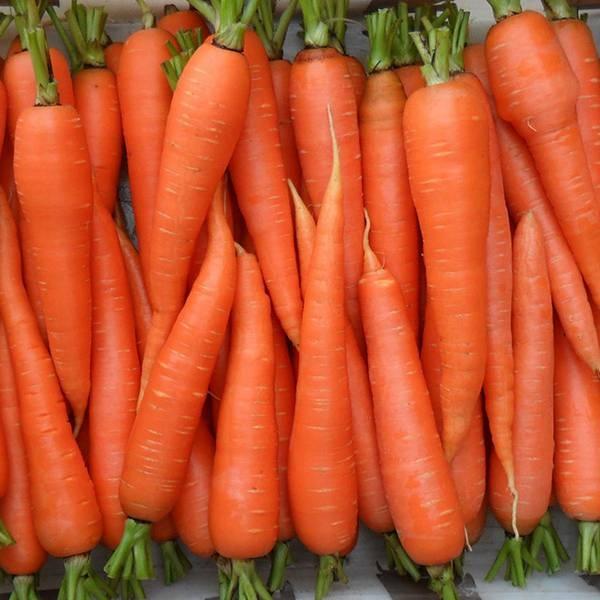 Витаминная морковь  какие в морковке содержатся витамины, и на что они влияют