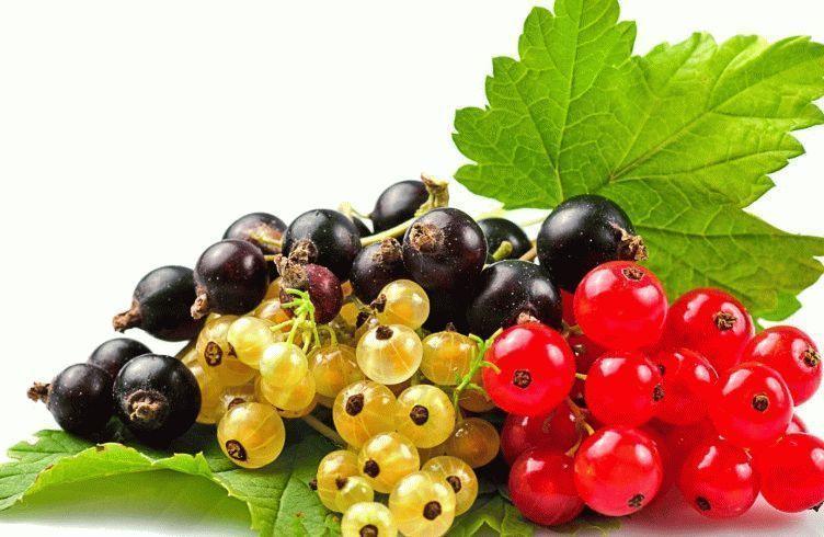 Чем подкармливать смородину после сбора урожая