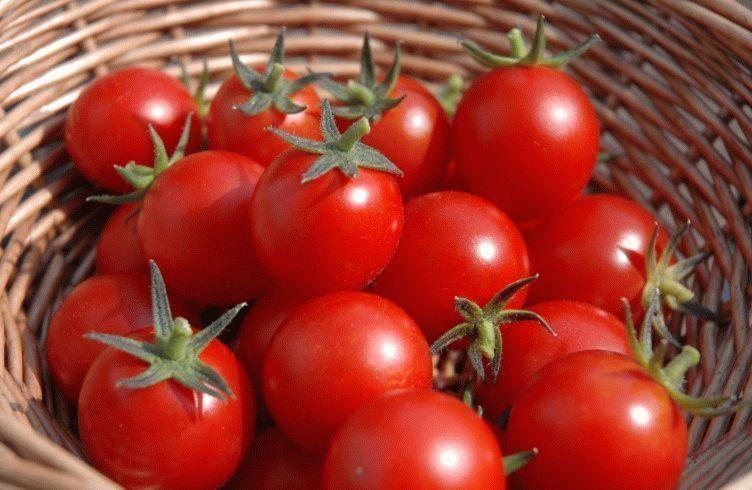Чем подкармливать томаты после высадки в грунт