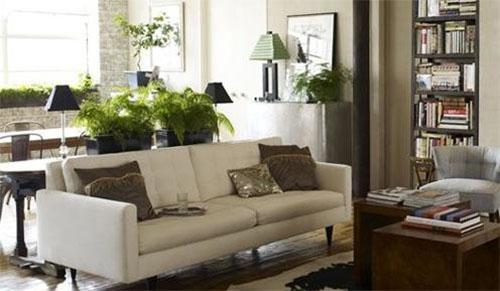 Домашние растения: чем украсить вашу квартиру?