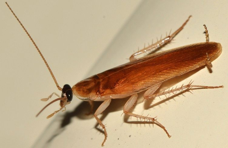 Как бороться с тараканами в частном доме — методы и средства
