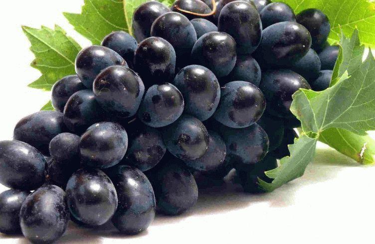 Когда лучше сажать виноград — посадка и уход