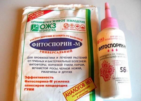 Препарат Фитоспорин: особенности применения для обработки томатов