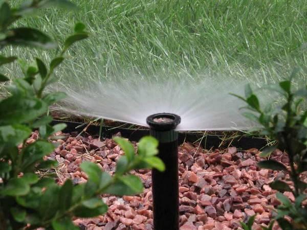 Разбрызгиватели для полива: характеристика видов и особенности эксплуатации