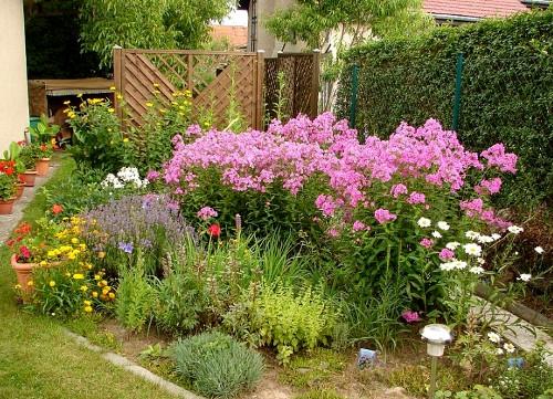 Выбираем растения для сада: на что обратить внимание?