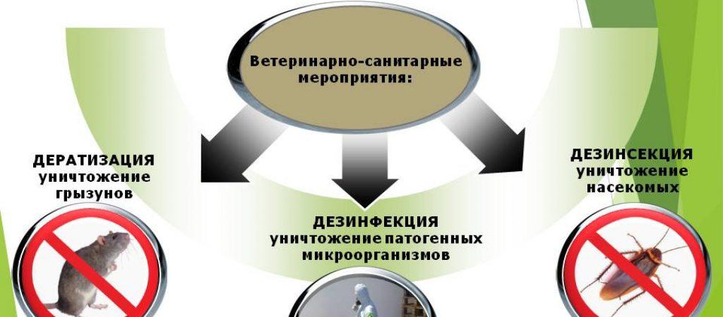 Цены дератизации, дезинфекции, дезинсекции в Москве